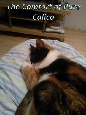 The Comfort of Pure Calico
