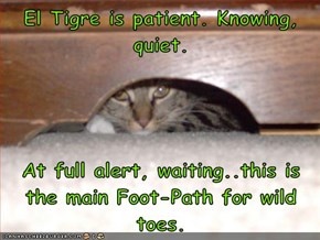 El Tigre is patient. Knowing, quiet.   At full alert, waiting..this is the main Foot-Path for wild toes.