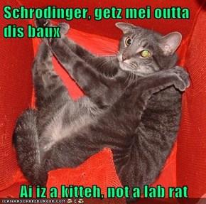 Schrodinger, getz mei outta dis baux  Ai iz a kitteh, not a lab rat