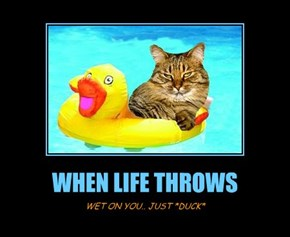 WHEN LIFE THROWS