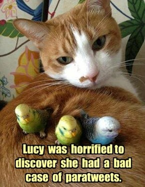 Lucy  was  horrified to discover  she  had  a  bad case  of  paratweets.