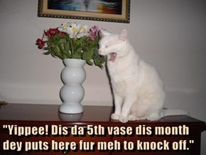 """Yippee! Dis da 5th vase dis month dey puts here fur meh to knock off."""