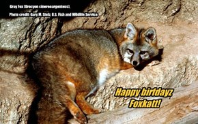 Happy birfdayz, Foxkatt!