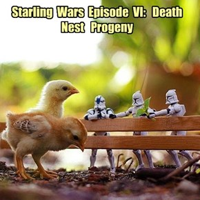 Starling  Wars  Episode  VI:   Death  Nest   Progeny