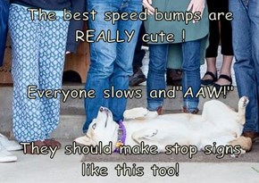 "The best speed bumps are REALLY cute !  Everyone slows and""AAW!"" They should make stop signs like this too!"