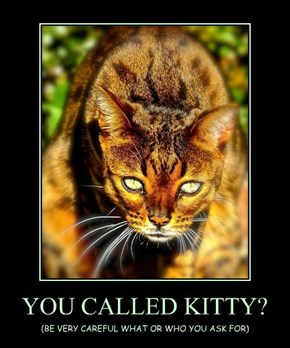 YOU CALLED KITTY?