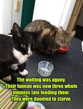 The waiting was agony. Their human was now three whole minutes late feeding them. They were doomed to starve.