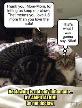 "Niko & Serafina say, ""DO NOT DECLAW!"""