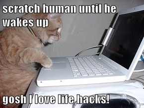 scratch human until he wakes up  gosh I love life hacks!