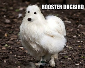 ROOSTER DOGBIRD