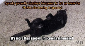 Spooky thinks declawing is spooky!