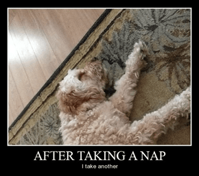 Not Sure if Lucky, Or Narcoleptic