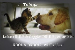 Lolcats RULE & Goggies DRULE.. er, or is it ROOL & DROOL?  WUT ebbur