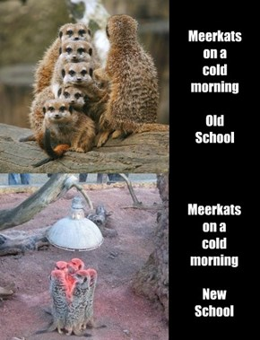 Times Change, Meerkats Don't