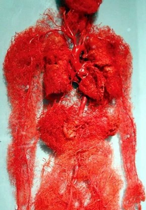 Your Circulatory System Is Crazy Looking