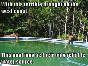 With this terrible drought on the west coast  This pool may be their only reliable water source.