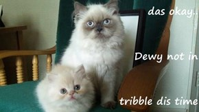 das okay.. Dewy not in tribble dis time