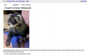 A Completely Inaccurate, but Awesome, Way to Describe a Ferret