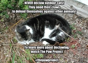 Never Declaw Outdoor Cats!