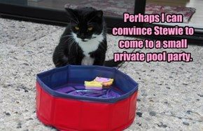 Perhaps I can convince Stewie to come to a small private pool party.