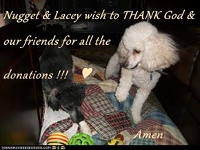 Nugget & Lacey wish to THANK God & our friends for all the  donations !!!    ♥                                Amen
