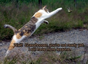 Wait!  Grasshopper, you're not ready yet.   I still have more lessons.