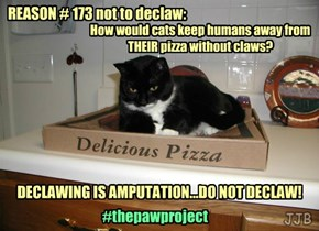 Reasons not to Declaw!