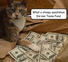 What a stoopy questshun. Dis mai Toona Fund.