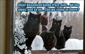 Ohai! Basement kinda froze over... All the pipes and so on... Can we come in there?
