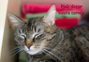 Pink decor beats catnip.