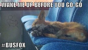 WAKE ME UP BEFORE YOU GO-GO  #BUSFOX