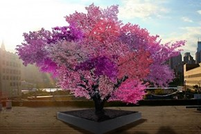 The Tree That Grows 40 Different Fruit