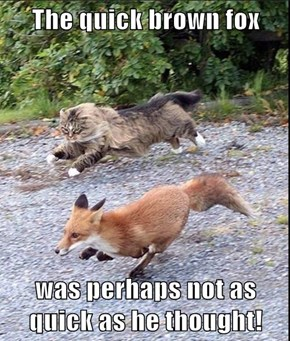The quick brown fox  was perhaps not as quick as he thought!