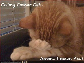 Ceiling Father Cat..  Amen.. I mean Acat