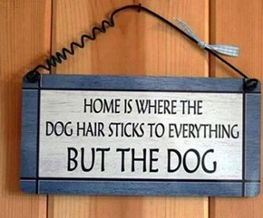 Home is Where the Hair is