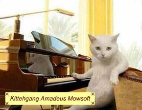 Kittehgang Amadeus Mowsoft