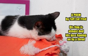 A POEM by Tuff Cat Fred   Dis fing is almost ded  Ids juss haning on by a thred