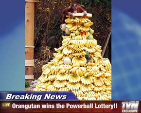 Breaking News - Orangutan wins the Powerball Lottery!!
