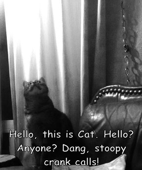 Hello, this is Cat. Hello? Anyone? Dang, stoopy crank calls!