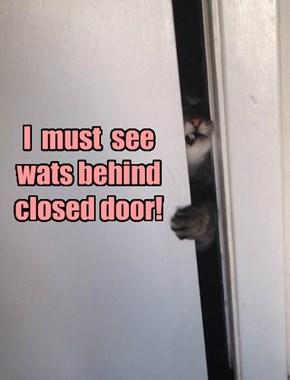 Its a cat law!