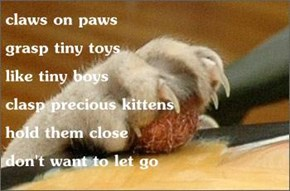 claws on paws                                 grasp tiny toys                          like tiny boys                         clasp precious kittens               hold them close                           don't want to let go