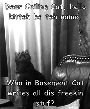 Dear Ceiling Cat, hello kitteh be teh name,   Who in Basement Cat writes all dis freekin stuf?