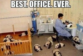 It's Panda-monium!
