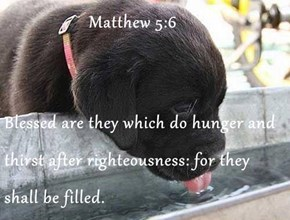 Matthew 5:6  Blessed are they which do hunger and thirst after righteousness: for they shall be filled.