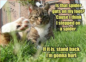 Spiders. Ick. Spider Guts. Ick. Ick.