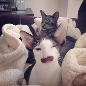 Mustache Cat is Suspicious