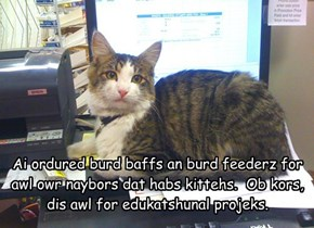 Ai ordured burd baffs an burd feederz for awl owr naybors dat habs kittehs.  Ob kors, dis awl for edukatshunal projeks.