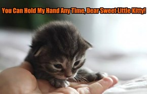 You Can Hold My Hand Any Time, Dear Sweet Little Kitty!