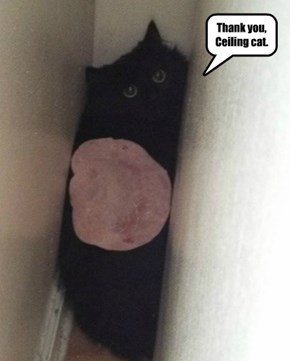 Thank you, Ceiling cat.