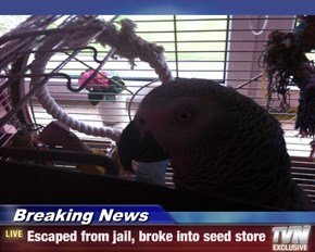 Breaking News - Escaped from jail, broke into seed store